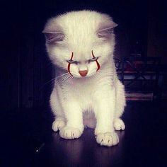 if pennywise shapeshift into a cat XD