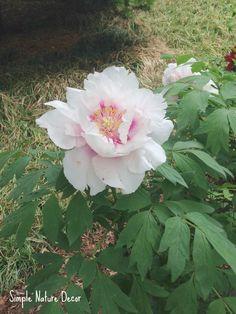 Gorgeous White Botanical Flowers | Simple Nature Decor