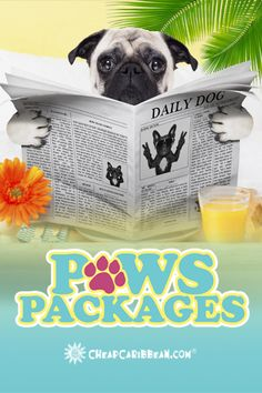 Poolside cabanas with Tempawpedic mattresses are included in our new #PawsPackages. You'll wish you had one.   Learn how to send your pet on a #PawsPackage getaway!