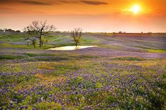 Bluebonnet Sunset by the Lake by Oilfighter