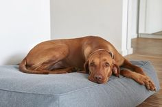 We know your faithful friend is an important part of your life, so bring them into the heart of your home with this beautiful Scala Dog Lounge Cushion by MiaCara.