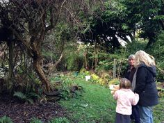 A well established Forest Garden in Ohakune (NZ).