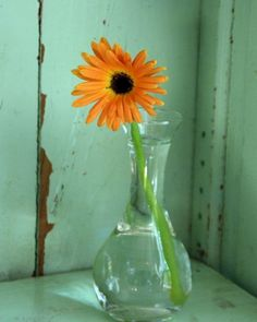 I really like the contrast of the orange Gerbera daisy in a simple vase with the contrasting aged aqua green background