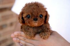 Cutest pets on the web - OMG!
