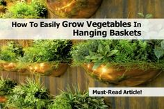 How To Easily Grow Vegetables In Hanging Baskets