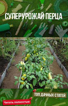 Leaf Vegetable, Vegetable Garden, Container Gardening, Gardening Tips, Ornamental Plants, Root Vegetables, Garden Trellis, Fruit Garden, Small Farm