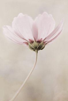 """#Fleur #FLOWER Vote ♡ J'aime sur """"Couleurs de Lecture"""" par Céline RIGAL en suivant le lien : http://on.fb.me/1qRuge6"""