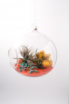 Terrarium Glass At Pigment