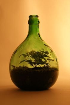 Green bottle terrarium