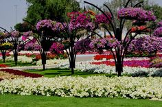 GREMLINESS: In Al Ain, UAE -- the world's largest hanging flower baskets
