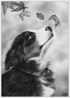 Autumn Puppy Bernese Mountain Dog - Zindy S.D. Nielsen