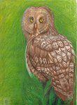 Barnowl in Prismacolor Pencil by eoshek