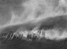 Okavange Delta, Zebras in dust field, Botswana, Africa 2007 gelatin silver print