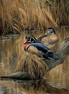 Backwaters-Wood Ducks by Rosemary Millette  |  Wild Wings
