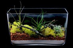 Items similar to Rectangle Vase Terrarium on Etsy Orchid Plants, Air Plants, Orchids, Rectangle Glass Vase, Glass Terrarium, Terrariums, Miniature Trees, Mans Best Friend, Bonsai