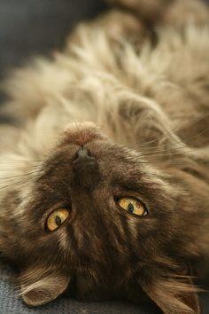 Laiska kissa / Lazy cat |