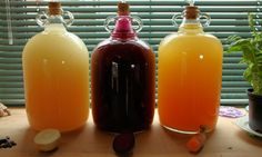 Parsnip, beetroot and carrot wine in demijohns