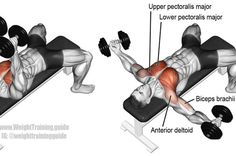 Targets your upper pectoralis major. Your lower pectoralis major, anterior deltoid, and the short head of your biceps brachii act as synergists. Also known as the dumbbell chest fly. Gym Workout Tips, Dumbbell Workout, Fitness Workouts, Dumbbell Exercises, Workout Men, Training Exercises, Workout Schedule, Workout Routines, Workout Exercises