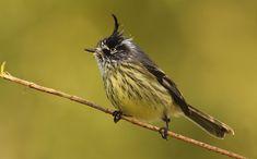 Small Birds, Little Birds, Love Birds, Beautiful Birds, Pet Birds, Animals And Pets, Cute Animals, Chili, Bird Watching