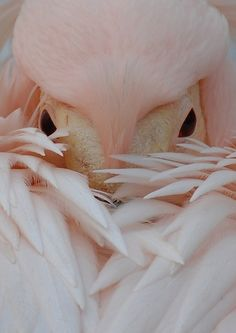 Pink Pelican; photo by londonlomax