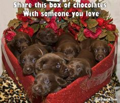 Share this box of chocolates with someone you love!