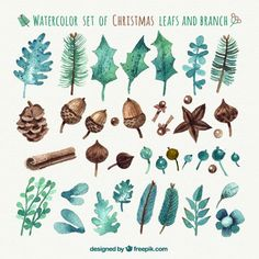 Watercolor christmas leafs and branches Free Vector More