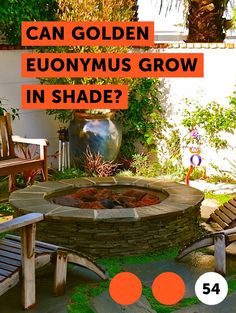 How to Grow Elephant Ear Plants Indoors How to Grow Elephant Ear Plants Indoors. Elephant ear plants are large-leaved caladiums native to the tropical Americas and grown for their ornamental value. They are closely related to taro Flowering Succulents, Planting Succulents, Planting Flowers, Elephant Ear Plant, Elephant Ears, Growing Tree, Growing Plants, Growing Grass, Growing Vegetables