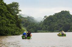 Kinabatangan – Auf Fluss-Safari durch den östlichen Dschungel Borneos