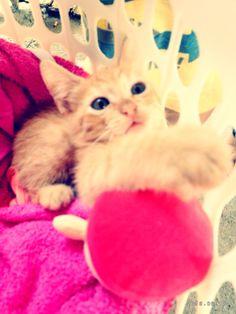 Es muy bello. #gatitos
