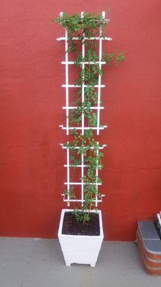 Suporte e treliça em ferro para plantas no Elo7 | Ferro e Verde (7BA646)