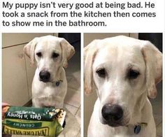 Funny Animal Pictures 22 Pics
