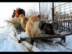 """""""Сибирь суровая и пекрасная""""   """"Siberia is a harsh beautiful"""""""