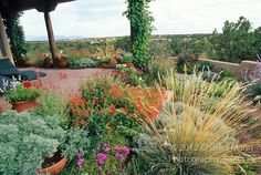 A colorful Xeriscape  garden design  by Susan Blake of Santa Fe, New Mexico, features many beautiful drought tolerant species, including Zau...