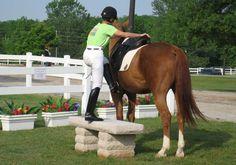 Vocabulario verbo #2: Montó (montar)- ir en una caballo.
