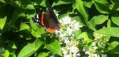 Butterfly 101 at the Linda Loring Nature Foundation--fun for all, inside and outside!