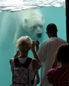 26 February 2012:  Wow!  The Kansas City Zoo is so much better than it was even a couple years ago.  The habitats seem much more pleasant for the animals, and there are lots of different paths with which to get your exercise.  P.S.  I really like watching the polar bear.
