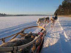 IDogsledding across frozen lakes, Kuhmo, Finland Good Neighbor, Us Travel, Finland, Alaska, Sleigh Rides, Frozen, Mountains, Lakes, Ponds