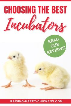 Choosing the best incubators doesn't have to be complicated. If you've been thinking of incubating and hatching your own chicken eggs but you're not sure where to start, you've come to the right place. Before you think about ordering hatching eggs, you'll need to have all the equipment in place to allow for a successful hatch. Read on to learn exactly what you need (and don't need). #raisinghappychickens #backyardchickens #incubators Raising Meat Chickens, Raising Ducks, Backyard Farming, Backyard Chickens, Incubating Chicken Eggs, Chicken Egg Colors, Egg Facts, Chicken Facts, Facts For Kids