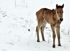 A three-day-old foal enjoys the spring snow. He doesn't have a name yet - click through to send your suggestions!