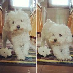 Sono una cucciola... Ho solo 10 anni🐩🐩🐩🙊🙊
