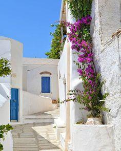Isternia Tinos Greece by me @vsiras #the_daily_traveller www.dailytraveller.gr Follow me on @vsiras & @bestgreekhotels #greecetravelgr #greecetravelgr1_ #greecestagram #insta_greece #team_greece #super_greece #greece #instalifo #kings_greece #athensvoice #loves_greece #ilovegreece #igers_greece #ig_greece #roundphot0 #ae_greece #travel_greece #reasonstovisitgreece #wu_greece #visitgreece #greecelover_gr #life_greece #instagreece #tv_greece #great_captures_greece #gf_greece #welovegreece_ #ig Tinos Greece, Greek Flowers, Forest Mountain, Paradise On Earth, Greece Islands, Bucket List Destinations, Corfu, Flowering Trees, Greece Travel