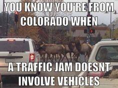 Photos: Twenty funniest Colorado Memes posts