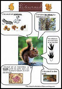 fiche documentaire écureuil Zoologie, French Lessons, Teaching French, Science And Nature, Pre School, Animal Crafts For Kids, Animals For Kids, Montessori, Animal Facts