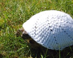 Turtle Cozy. Because your turtle is cold-blooded.