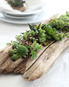 A piece of driftwood is hollowed to make a beautiful succulent planter.  It can be displayed indoors on  a table or outdoors as part of your garden display.