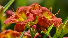 Beautiful Flowers, Most Beautiful, Flower Photos, Yellow Flowers, Trees To Plant, Flora, Herbs, Plants, Inspiration