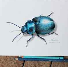 Beetle Drawing By Chloe O'Shea