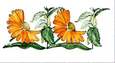 Herbal Extracts, Herbalism, Flowers, Products, Aromatherapy, Herbal Medicine, Royal Icing Flowers, Flower, Florals