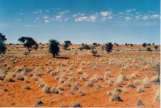 The Kalahari desert is located in Botswana, Namibia,  South Africa
