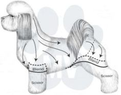 Grooming systems allow us to go on autopilot. When we're on autopilot, we can focus on the thing that matters the most - pets! Think about the things you do every day. I'm sure you use systems all . Havanese Grooming, Poodle Grooming, Havanese Puppies, Shih Tzu Puppy, Pet Grooming, Poodle Puppies, Grooming Shop, Maltese Dogs, Shih Tzus